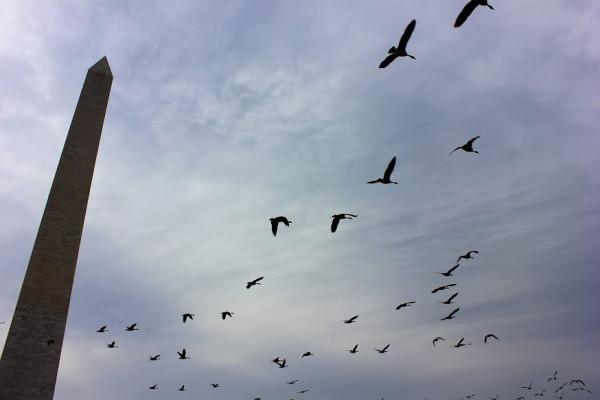 The Washington Monument towers over the capital landscape. Photo by Maia Samboy