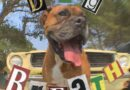 """""""Dog Breath"""" exposes societal issues with a unique vision"""