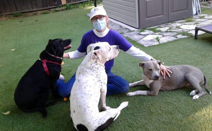CVHS bookroom staff helps animals across the Bay Area